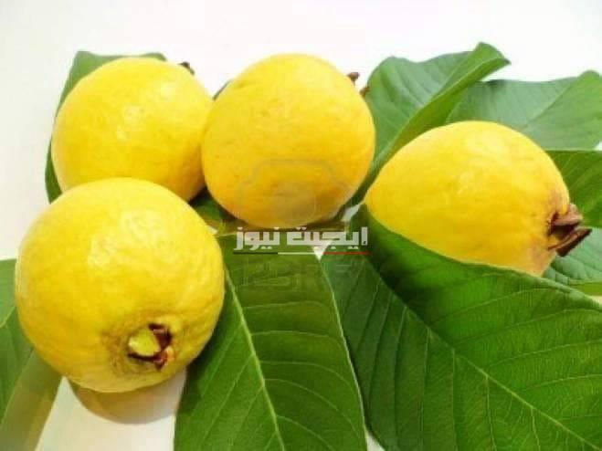 فوائد تناول فاكهة الجوافة