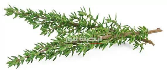 11 فائدة صحية لعشبة الزعتر