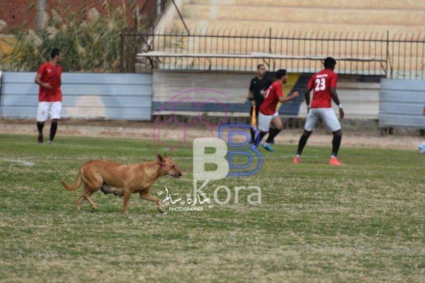 """""""كلب"""" يقتحم مباراة مقاولون طنطا وسيدي سالم بالقسم الثالث"""